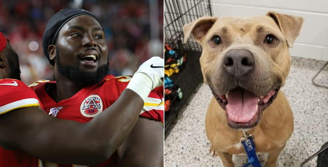 Chiefs player celebrate the super bowl win by paying shelter fees for 109 dogs